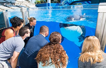 Guests participating in Killer Whale Up-Close Tour