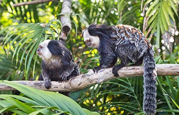 Get up close to Marmosets and other amazing animals at Discovery Cove