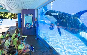 Get up close with Orcas at camp at SeaWorld