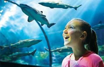Get up close with sharks at SeaWorld Orlando.