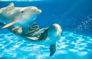 Dolphin Awareness Month