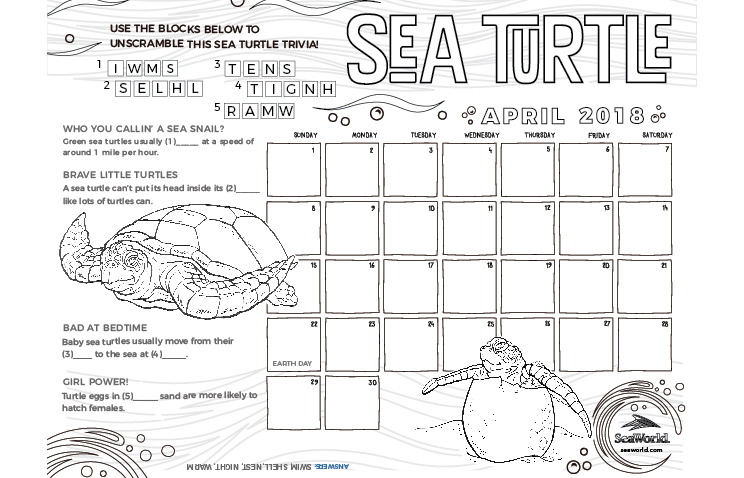 Kids Calendar Sea Turtle
