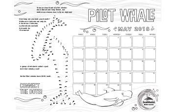May Calendar Pilot Whale