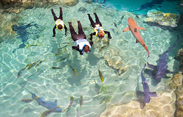 Swim with Sharks at Discovery Cove