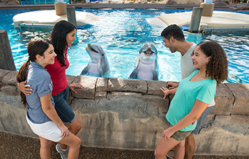 Dolphin Up-Close Tours at SeaWorld Orlando