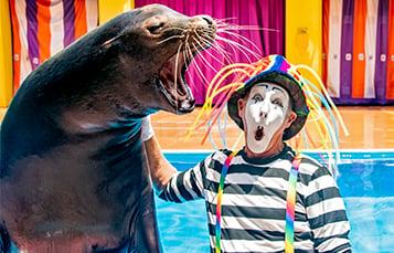 July Pass News at SeaWorld Orlando