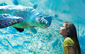 Turtle Reef and Girl