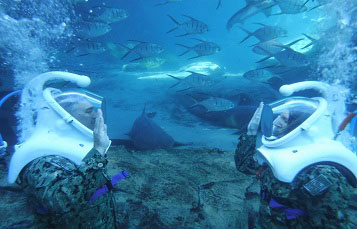 Discovery Cove Celebrates the US Navy Birthday with a Underwater Reenlistment Ceremony