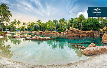 Discovery Cove Video Background Preview