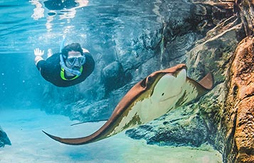 Swim in The Grand Reef at Discovery Cove Orlando