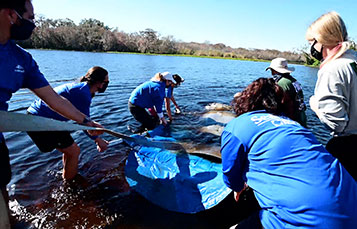 After a successful rehabilitation, Lesley was returned to Blue Springs by the SeaWorld Rescue Team.