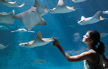 Girl at the Manta Aquarium