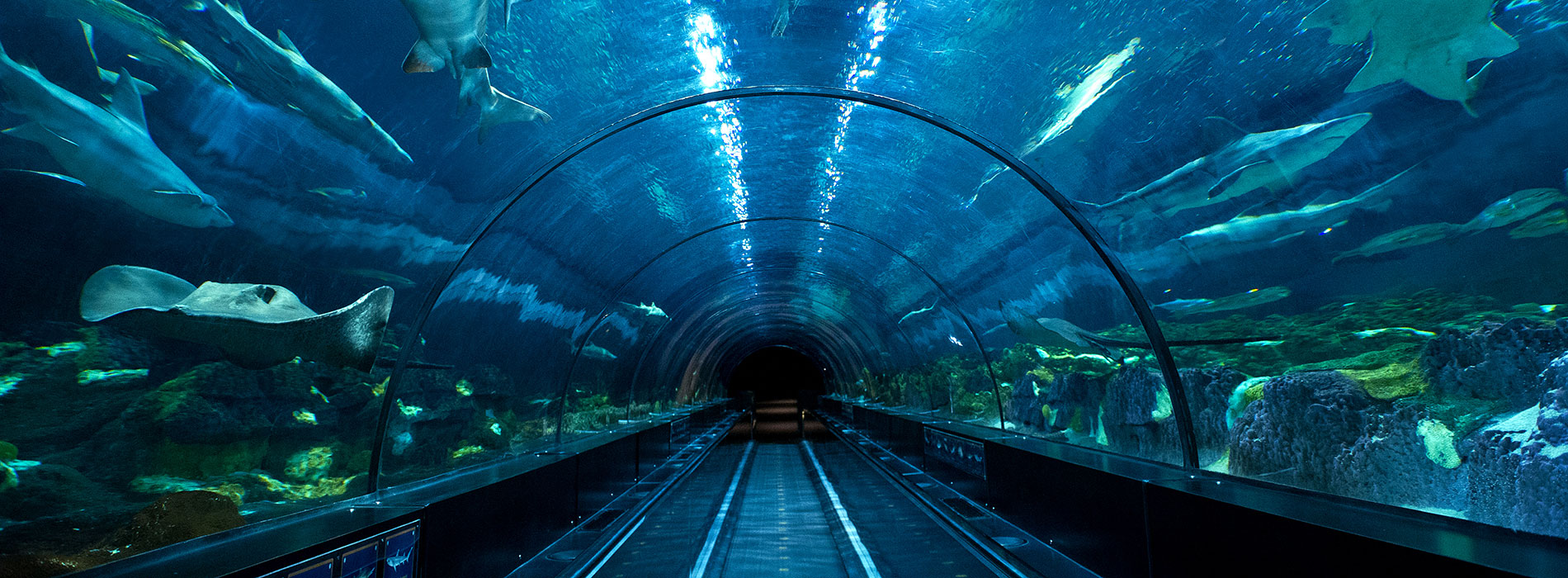 Shark Underwater Viewing