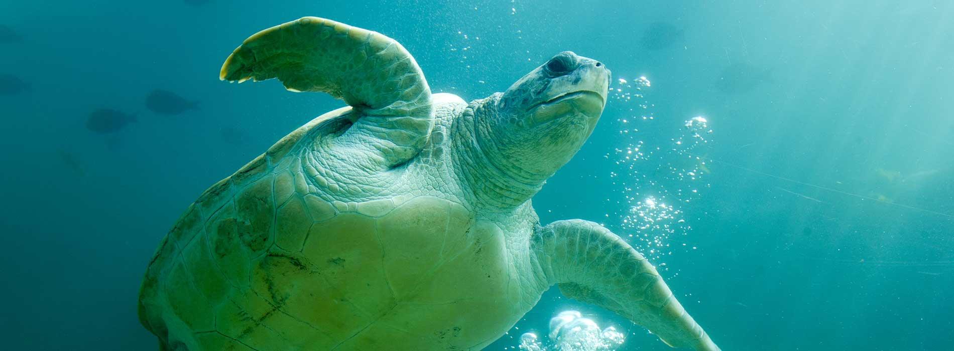 Turtles at Turtle Trek