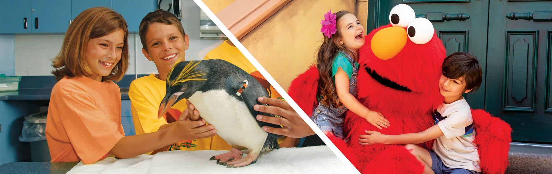 SeaWorld Orlando Family Adventure Tour