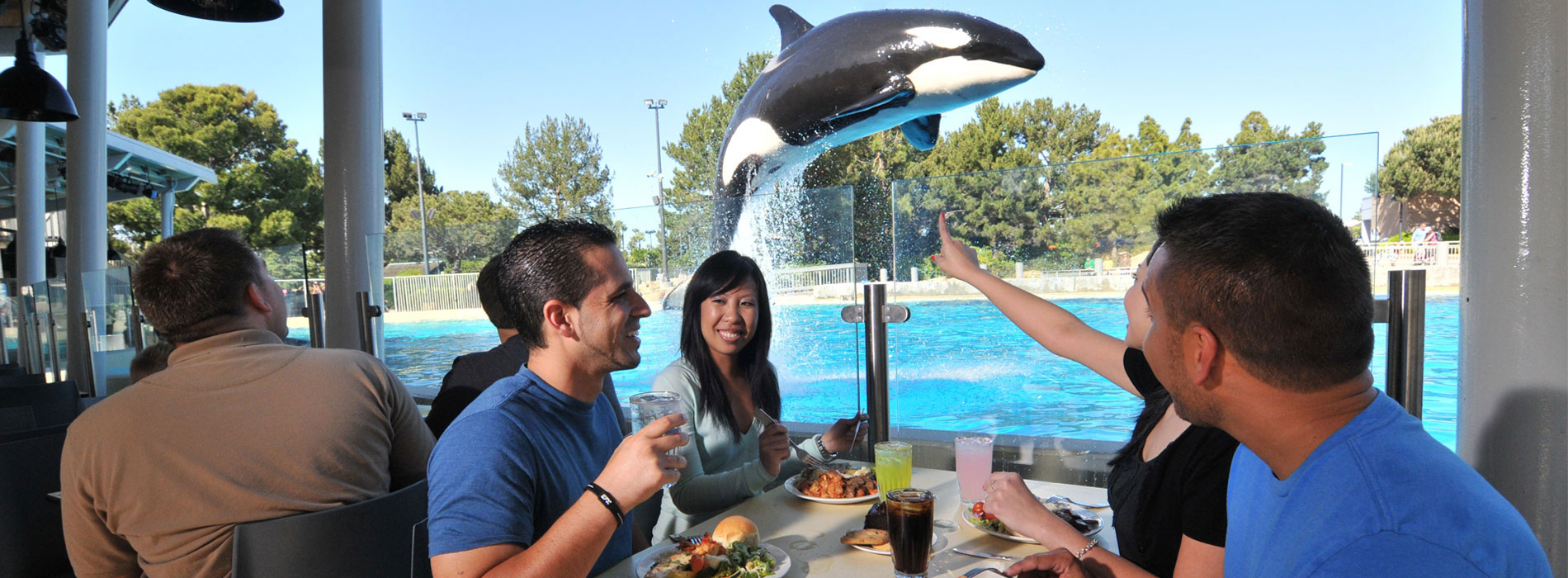 Enjoy a delicious buffet meal at Dine with Orcas.