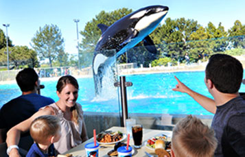 Enjoy a delicious buffet meal during Dine with Orcas.