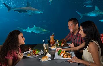 Sharks Underwater Grill