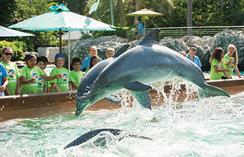 Campers at Dolphin Cove
