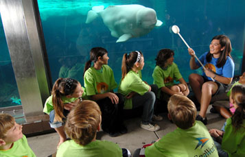 SeaWorld Orlando Wild Careers Day Camps Dolphin Fun