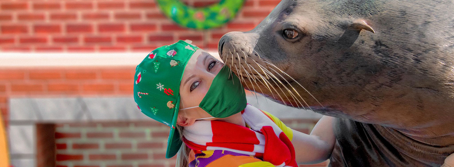 Christmas Shows Orlando 2020 Sea Lion High: The Christmas Special | SeaWorld Orlando