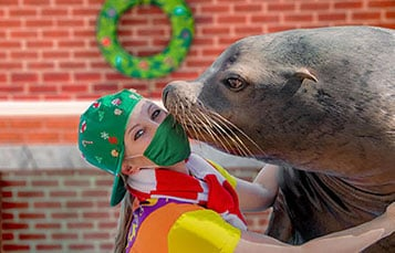 Sea Lion High Christmas Show at SeaWorld Orlando