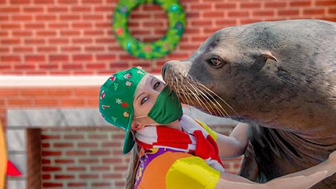 Sea Lion High Christmas Show at SeaWorld Orlando