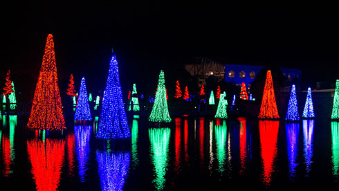 SeaWorld's Christmas Celebration Sea of Trees
