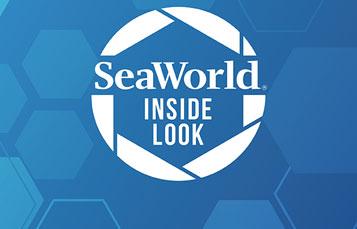 SeaWorld Inside Look