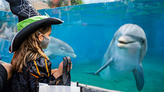 Enjoy our family-friendly Halloween Spooktacular at SeaWorld Orlando
