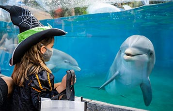 Experience SeaWorld Spooktacular at SeaWorld Orlando