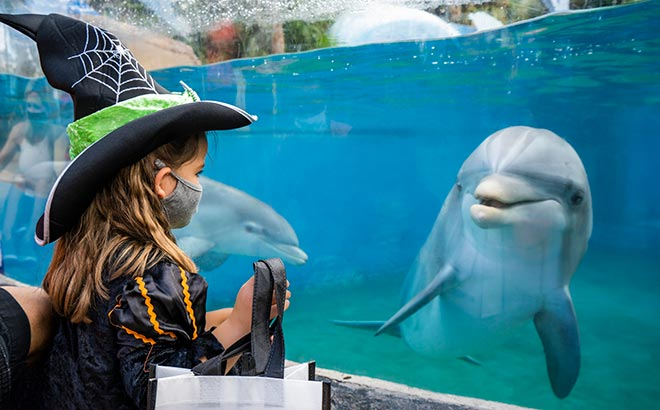Girl in costume looking at a SeaWorld dolphin