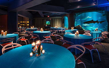 Sharks Underwater Grill Private Dining Room