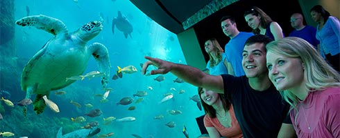 Get up close to a variety of animals at SeaWorld Orlando