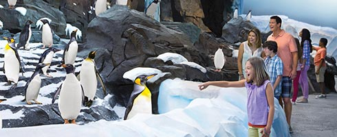 See penguins at Antarctica: Empire of the Penguin at SeaWorld Orlando