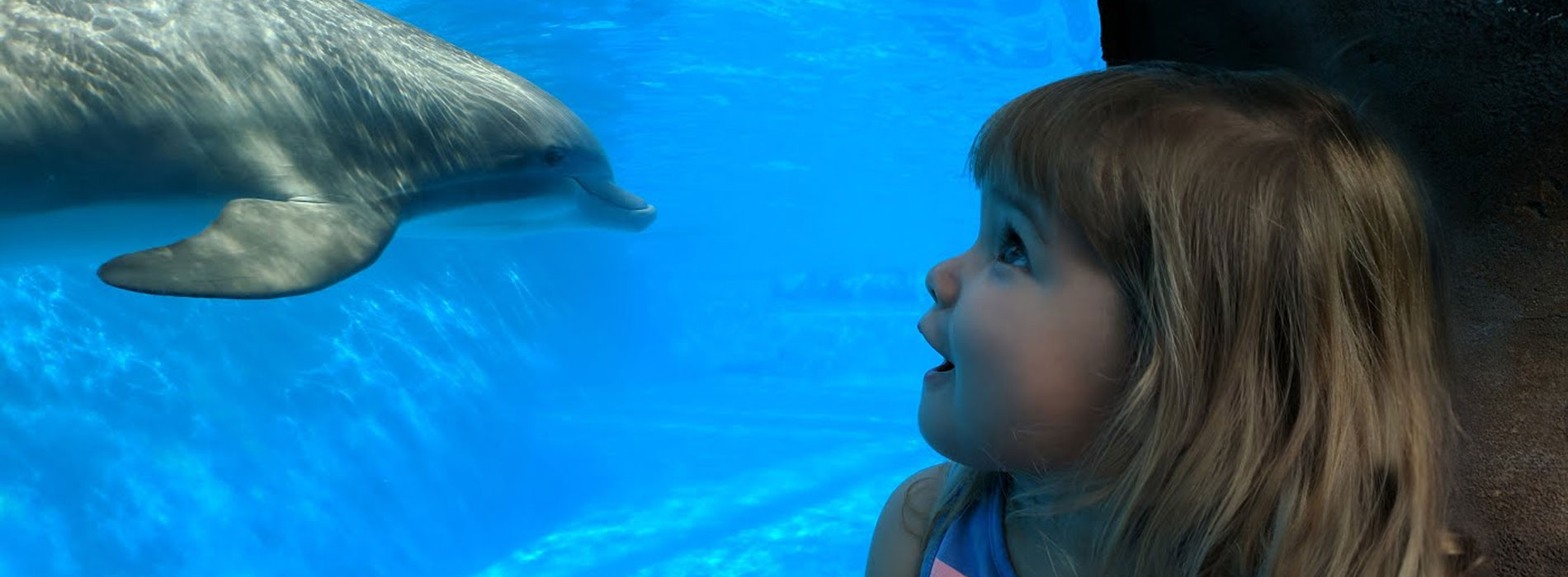 Visiting SeaWorld with small children