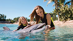 Relax on sandy beaches or swim with dolphins at this all-inclusive resort: Discovery Cove.