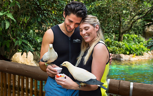 Get up close with birds in our free flight aviary at Discovery Cove