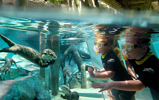 See Otters during a swim in the Freshwater Oasis at Discovery Cove
