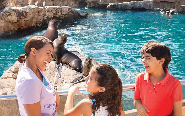 Seals and Sea Lions at Pacific Point Preserve at SeaWorld Orlando