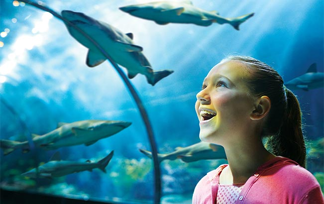 See sharks from an underwater perspective at SeaWorld Orlando