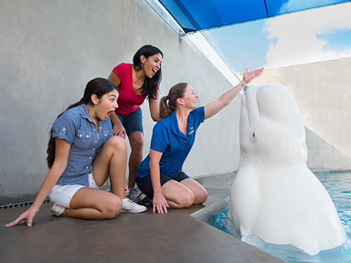 Beluga Up-Close Tour at SeaWorld Orlando