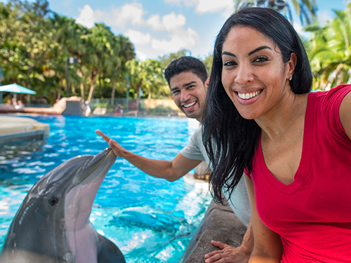 Dolphin Encounter at SeaWorld Orlando