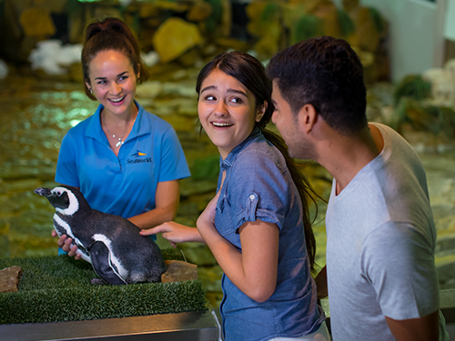 Penguin Encounter at SeaWorld Orlando