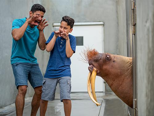 Walrus Up-Close Tour at SeaWorld Orlando