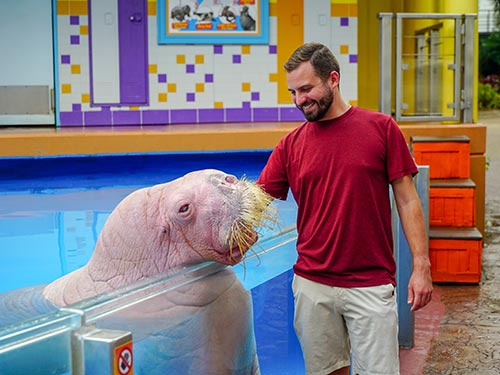 SeaWorld Orlando Walrus Encounter