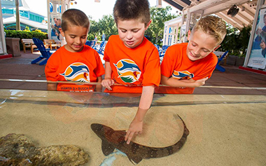 Ocean Detectives Camp at SeaWorld Orlando