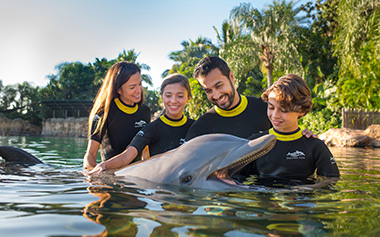 Discovery Cove Dolphin Interaction