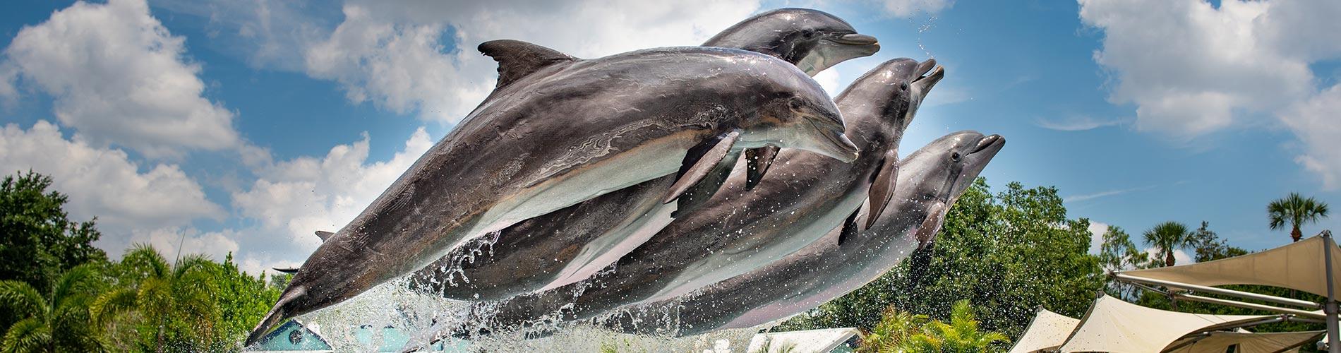 Dolphin Adventures at SeaWorld Orlando