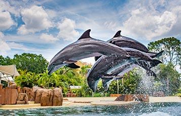 Dolphin Adventure at SeaWorld Orlando